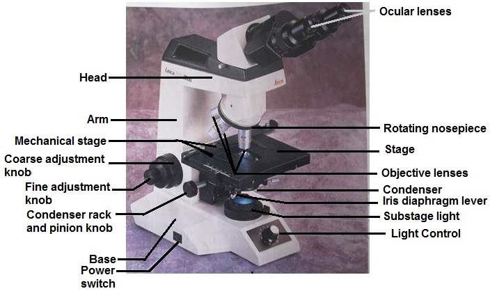 Compound Microscope And Its Parts
